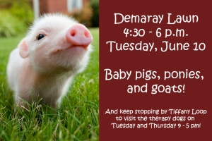 Baby pig therapy at SPU